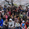 Indonesian students and their families enjoying the spring blossoms on campus at Osaka University
